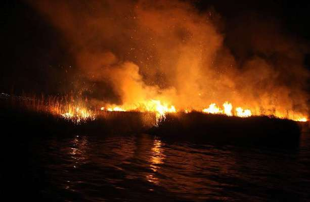 ۱۹ هکتار از نیزارهای دریاچه زریبار در آتش سوخت