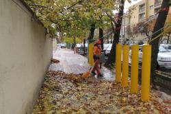جمع آوری ۷۹۰ تن برگ در شیراز برای تبدیل به کود برگ