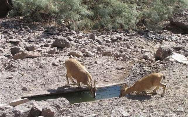 ۵۰ آبشخور دام مناطق شکار ممنوع دامغان پاکسازی شد