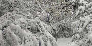 برف و باران در کشور و یخبندان در ۱۷ استان/ دوشنبه هوای شهرهای صنعتی آلوده میشود