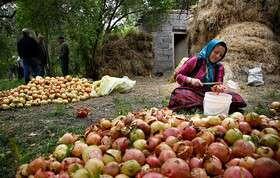 پرداخت بیش از ۷۵ درصد تسهیلات اشتغال روستایی