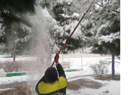 درختان برای جلوگیری از حوادث احتمالی برف تکانی میشوند