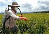 هشدارهای هواشناسی به کشاورزان تا ۱۹ دیماه/ فعلا سمپاشی نکنید