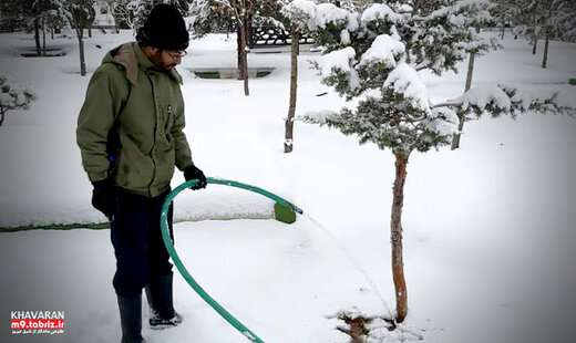 عملیات یخاب در راستای آفت زدائی درختان انجام می شود