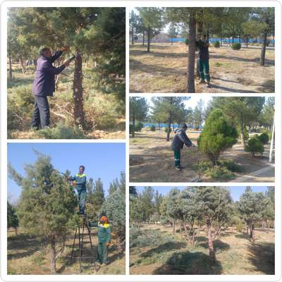 عملیات هرس زمستانه درختان پارک وحدت