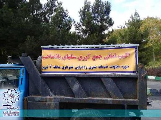 زندهگیری سگهای بلاصاحب در سطح منطقه ۷ تبریز