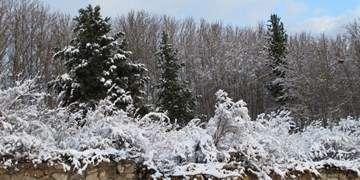 یخبندان در ۲۴ استان/برف و باران در غرب و شمال کشور