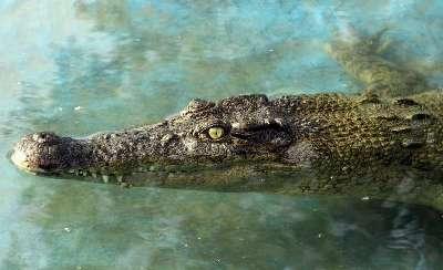هجوم تمساح ها به مناطق سیل زده صحت ندارد