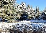 بارش برف ارومیه را سفید پوش کرد+گزارش تصویری
