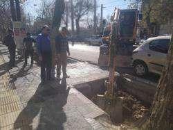 کاشت بیش از ۱۱ هزار اصله درخت  در معابر محدوده شهرداری منطقه یک