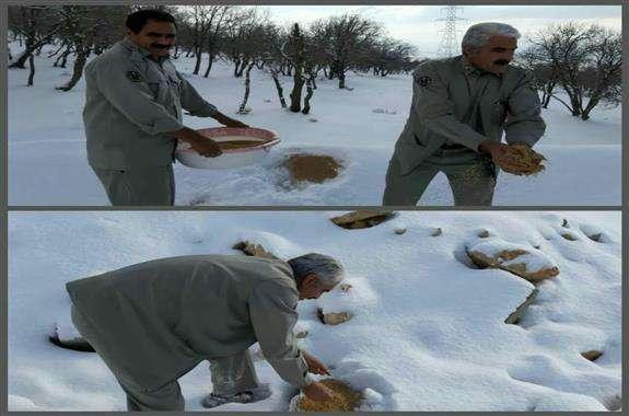 دانه پاشی برای حیات وحش و پرندگان در زیستگاه های سردسیری استان