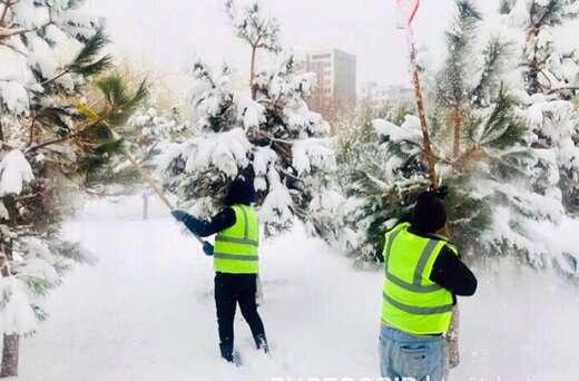 برف تکانی در بوستانها و فضاهای سبز سطح منطقه ۱