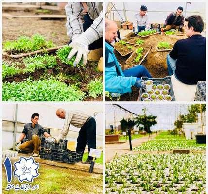 تولید گل و گیاه در گلخانه شهرداری منطقه ۱ تبریز