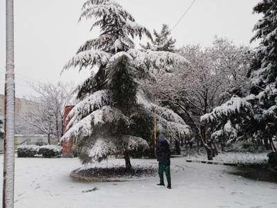 برف تکانی درختان و برف روبی معابر بوستان های قزوین در حال انجام است