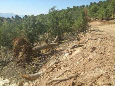 حال محیط زیست زاگرس خوب نیست و باید اقدامات و هماهنگی های  فوری برای اصلاح این روند صورت پذیرد