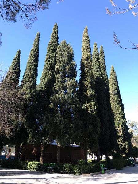 سولماز دهقانی: درختان باغ ملی شیراز شناسنامهدار شدند