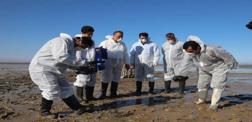 رییس سازمان دامپزشکی کشور اعلام کرد : بیماری بوتولیسم علت اولیه مرگ پرندگان میانکاله