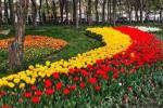 کاشت یک میلیون و ۲۰۰ هزار بوته گل در منطقه ۸ مشهد