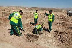 کاشت ۱۶۰ هزار اصله درخت در شیراز