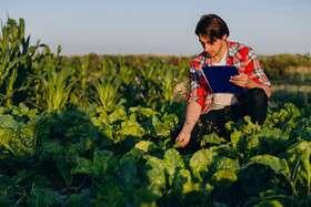 ۱۵۰۰ فارغ التحصیل کشاورزی جذب بازار میشوند