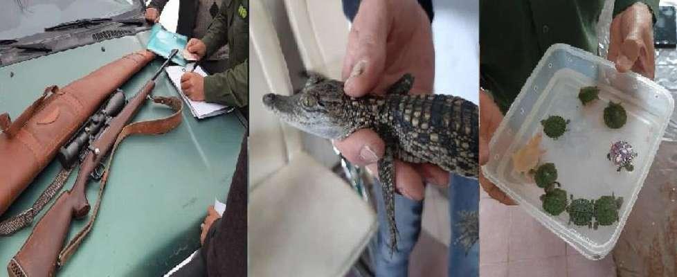 کشف و ضبط تمساح در ماموریت یگان حفاظت محیط زیست/ تعدادی از گونه های کشف شده رهاسازی شد