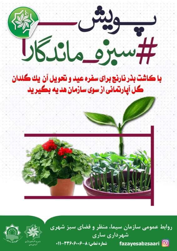 از پویش سبزه ماندگار تا یک گلدان گل به شهروندان