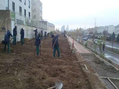 14 هزار اصله نهال و 70 هزار بوته درختچه در طرح پویش درختکاری کاشته شد