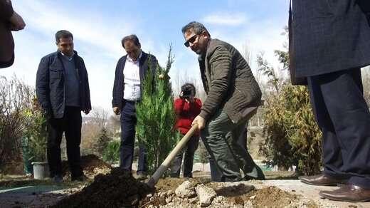 طرح کاشت یک میلیون نهال برای سال ۹۹ کلید خورد/ افزایش سرانه کاشت درخت  در دستور کار است