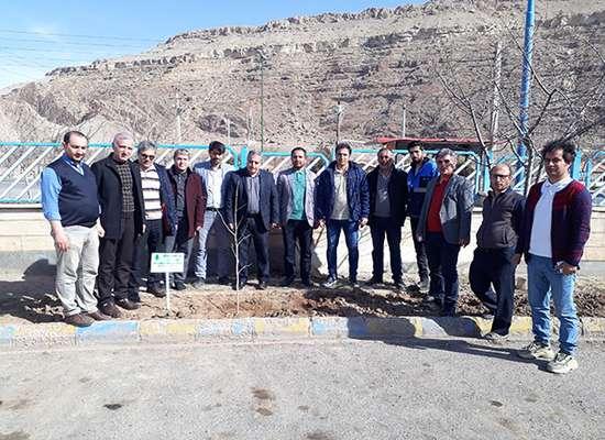 كاشت 160 اصل نهال در امور آب و فاضلاب شهرستان ماكو