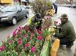 چهره ارومیه با کاشت بیش از 4 میلیون بوته گل بهاری شده است
