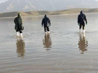 نجات ۲۵ قطعه پرنده باکلان در نمک زارهای دریاچه بختگان
