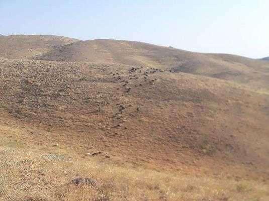 تعلیف غیر مجازدام در مراتع ملی منطقه حفاظت شده باشگل