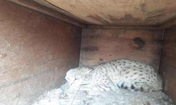 رها سازی یک قلاده گربه وحشی در پناهگاه بختگان