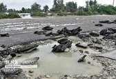 خسارت اولیه ۶۰۰ میلیارد تومانی به جادههای سیلزده/ انسداد ۱۰ محور در کشور به دلیل جلوگیری از شیوع کرونا