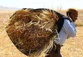 آغاز تخلیه کشتی حامل بیش از ۷۰ هزار تن گندم در بندر چابهار