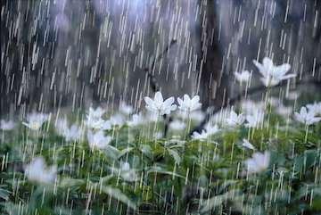 عبور موج بارشی از روی نوار شمالی/ بارش تگرگ فردا در مناطقی از گلستان، خراسان شمالی و خراسان رضوی