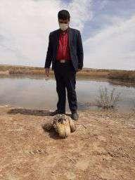 آزاد سازي يك بوتيمار در زيستگاه هاي طبيعي شهرستان آران و بيدگل