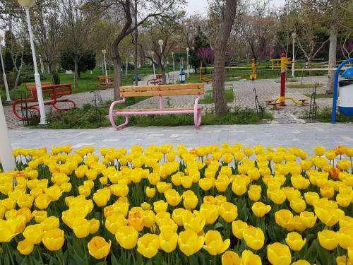 کاشت ۴۰هزار بوته گل لاله در بوستان کوهسنگی