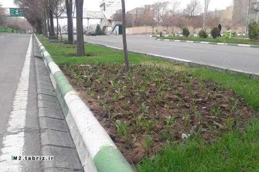 گلباران جاده ائل گلی با گل های بهاره