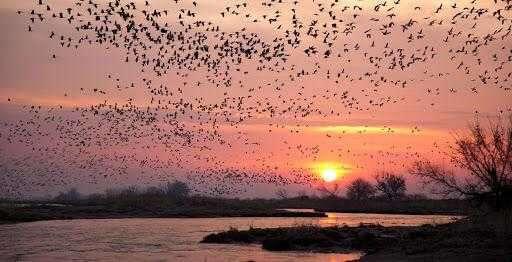 موعد بازگشت پرندگان مهاجر از تالاب های گیلان