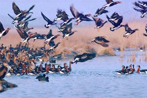 آخرین وضعیت تالابهای استان تهران/ افزایش قابل توجه پرندگان مهاجر در تالابها