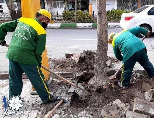 آغاز فاز دوم اجرای عملیات ساماندهی درختان و فضاهای سبز در اولین ماه سال جدید