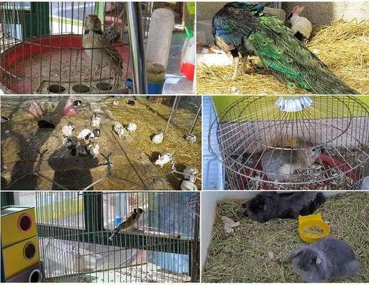پایش واحدهای صنفی عرضه گونههای جانوری در چهارمحال و بختیاری