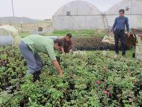 افزایش اشتغال بخش کشاورزی مستلزم توسعه مهارت