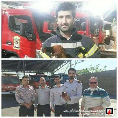 قرقاول صید شده که چند روزی میهمان آتشنشانان بود به محیط زیست سپرده شد/آتش نشانی رشت