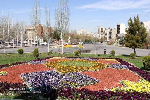 گل های شادی بخش بهاری در سطح شهر تبریز