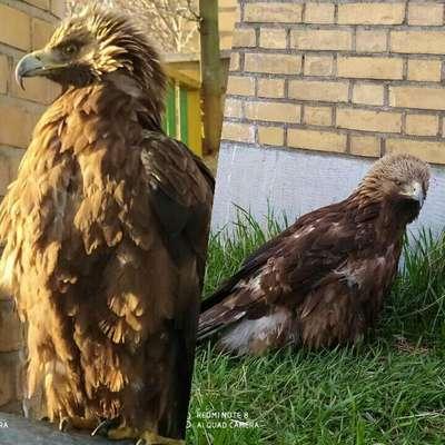 فروشندگان پرندگان شکاری در دام محیط بانان استان قزوین