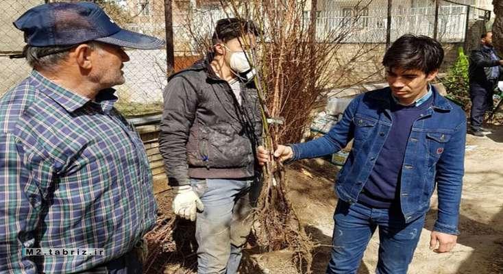 توزیع بیش از ۱۰ هزار اصله نهال میوه بین شهروندان تبریزی