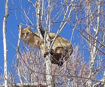 مشاهده یک قلاده گربه وحشی در زیستگاه های شهرستان دهگلان