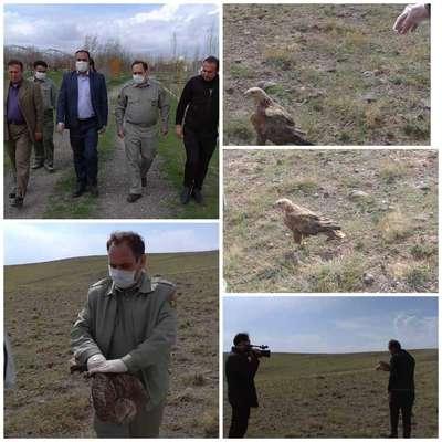 رها سازی ۱۸ قطعه پرنده وحشی در شهرستان سراب